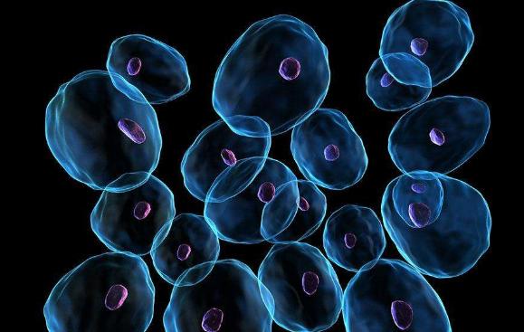 适应生物疗法的发展,以开发基于抗体的疗法,可调节γ-δT细胞