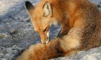 FOX商业网络在一月份成为商业新闻的领导者